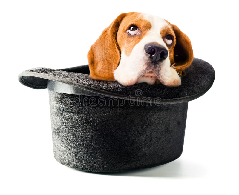 Hat of the wizard with a dog stock photos