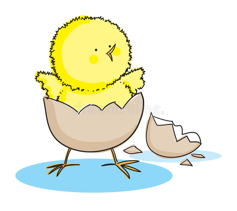 Hatching Easter Chick. Hand drawn picture of a hatching easter chick, illustrated in a loose style. Vector eps available vector illustration