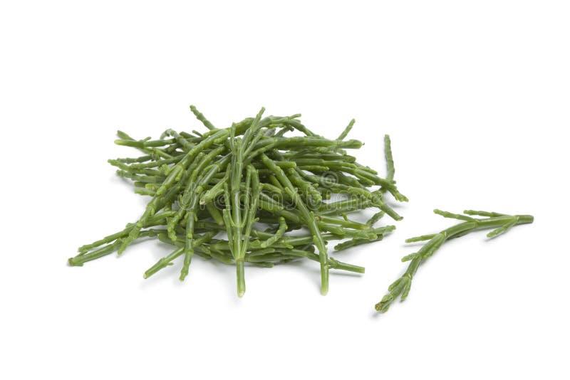 Haufen der Salicorniastiele stockbild