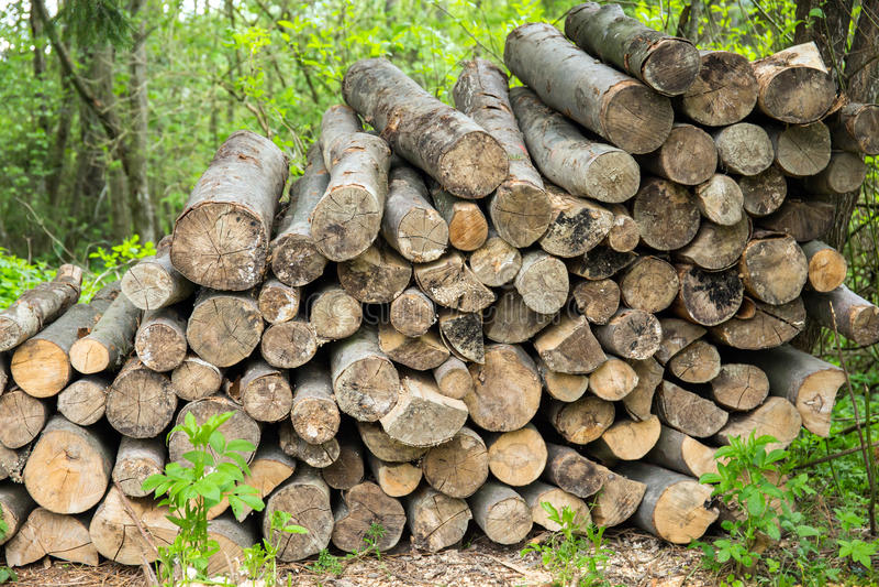 Haufen des Brennholzes lizenzfreies stockfoto