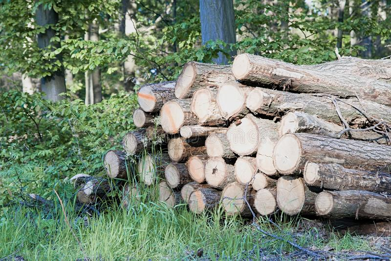 Haufen des Holzes lizenzfreie stockfotos
