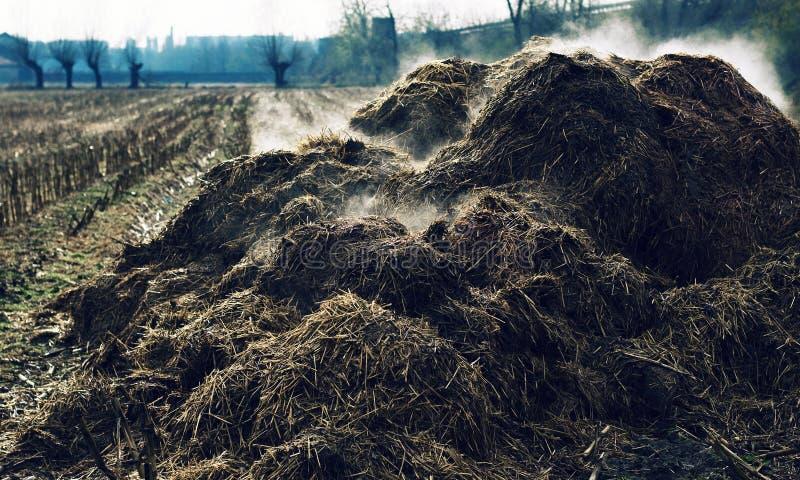 Haufen von dämpfendem Kuh-dung stockfotos