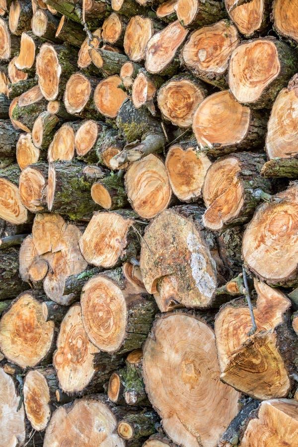 Haufen von den hölzernen Klotz bereit zum Winter lizenzfreie stockfotografie