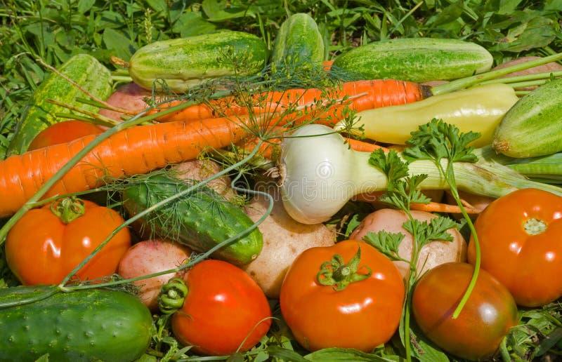 Haufen von Gemüse 8 lizenzfreie stockfotografie