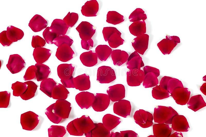 Haufen von roter Rose Petals lokalisiert auf weißem Hintergrund lizenzfreie stockbilder