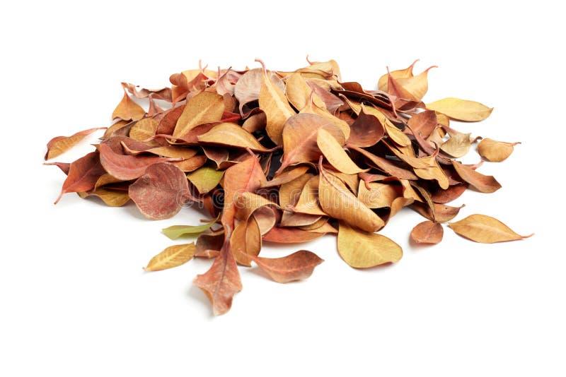 Haufen von trockenen Blättern auf weißem Hintergrund stockfotos