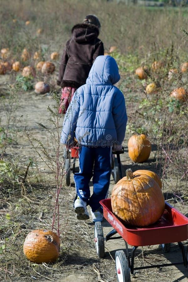 Haulin Pumpkins royalty free stock photos