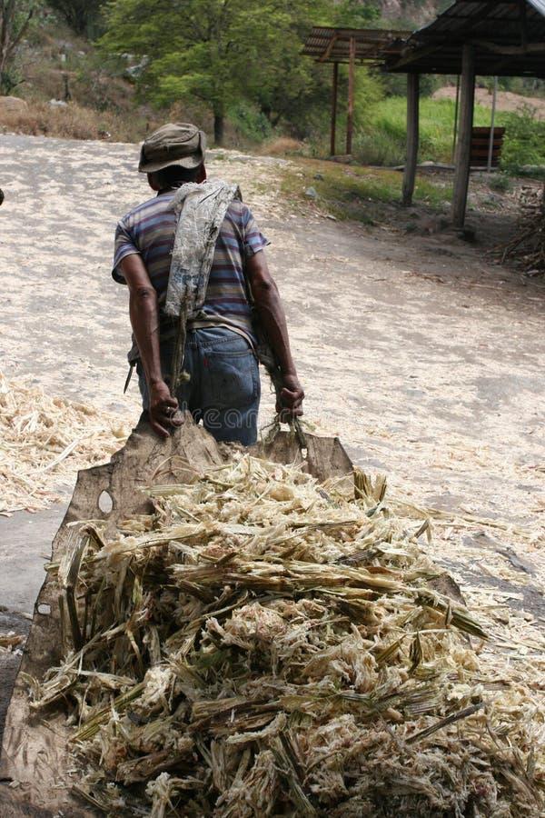 Download Hauling Sugar Cane stock image. Image of mountain, latin - 176347