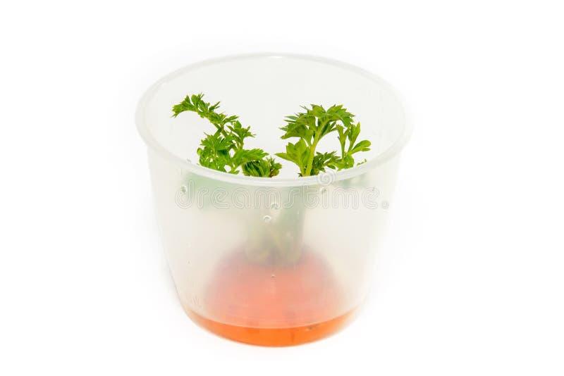 Haulm моркови в кухне стоковое фото