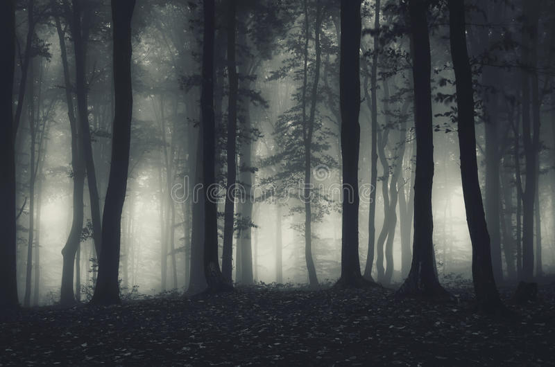 Haunted dark forest with fog. Haunted dark mysterious forest with fog on Halloween stock photography