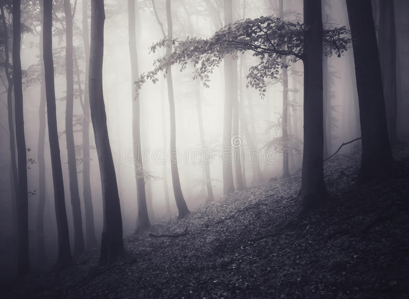 Haunted fantasy forest royalty free stock photo