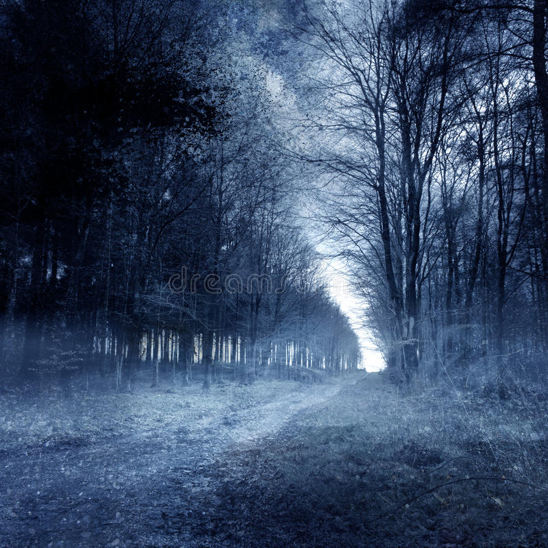 Haunted Forest. A ghostly haunted forest background stock image