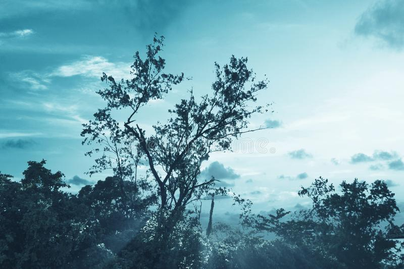 Haunted forest with fog over dramatic sky background royalty free stock photos
