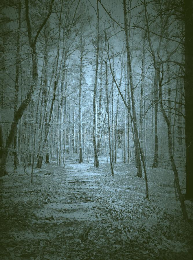 Haunted Forest ghosts scary weird royalty free stock photo