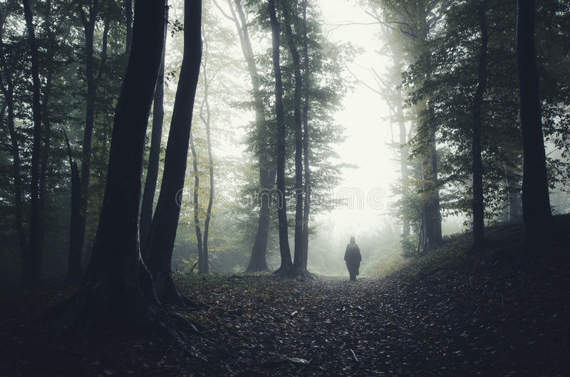 Haunted forest. Haunted Halloween forest with strange silhouette stock images