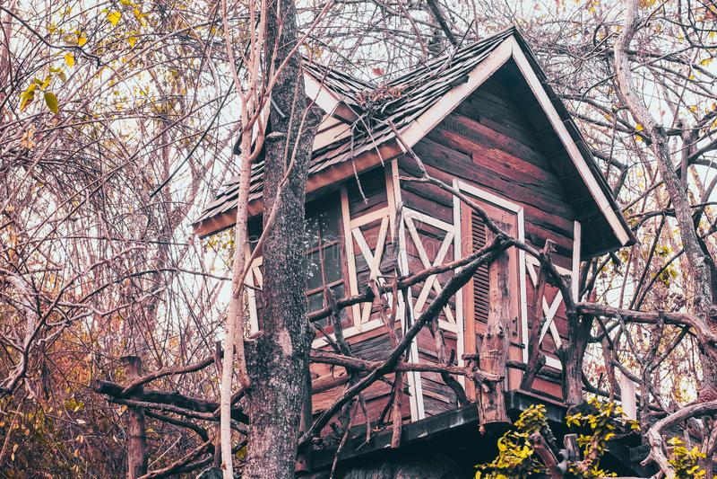 Haunted house on tree abandon place mystery concept idea background royalty free stock photo