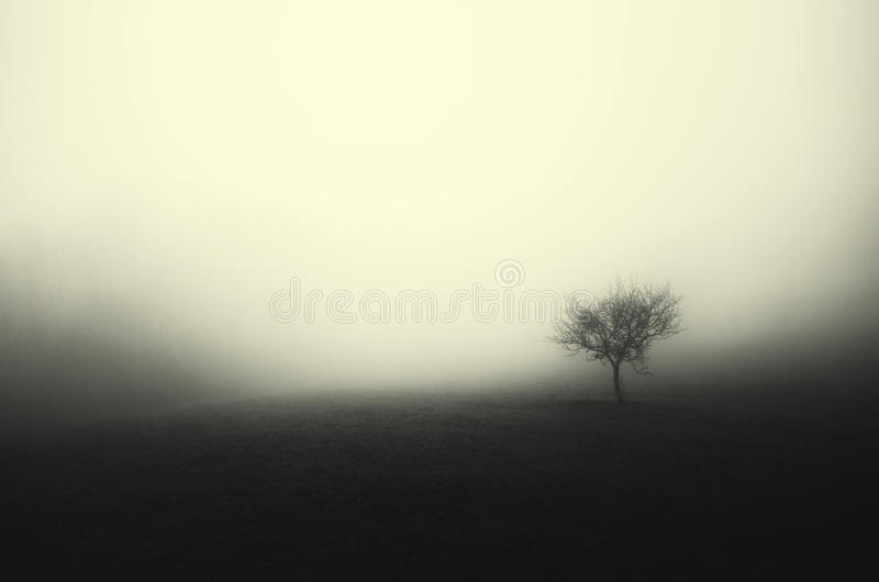 Haunted meadow with tree. Lonely tree trough fog on haunted meadow royalty free stock photography
