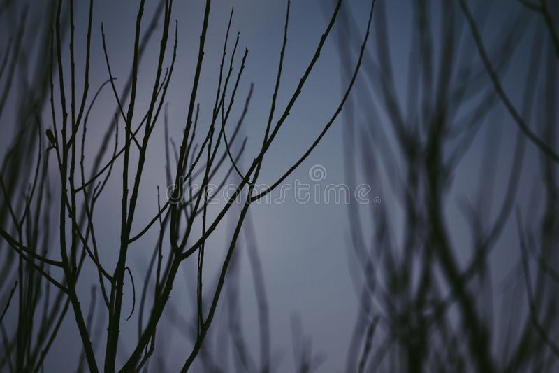 Haunted Pathway. [ Nikon D7100 ] — picture of some twigs on a dim and foggy evening stock images