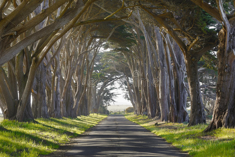 Haunted trees and road. Haunted looking trees towering over a country road stock image