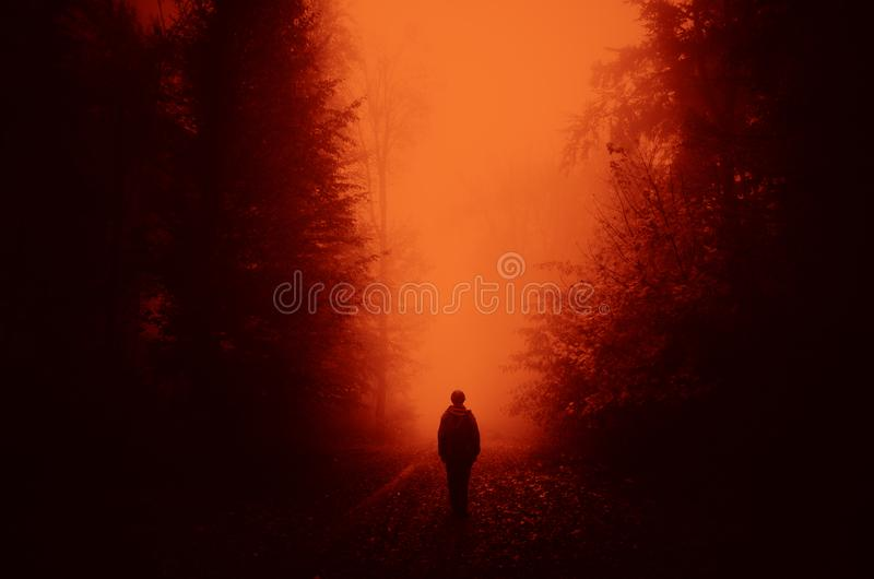 Haunted woods with surreal light. Man walking in surreal haunted woods. Mysterious eerie light in haunted forest with fog. Scary forest background stock photography