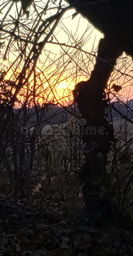 Haunting Forest View of Sky on Fire stock foto