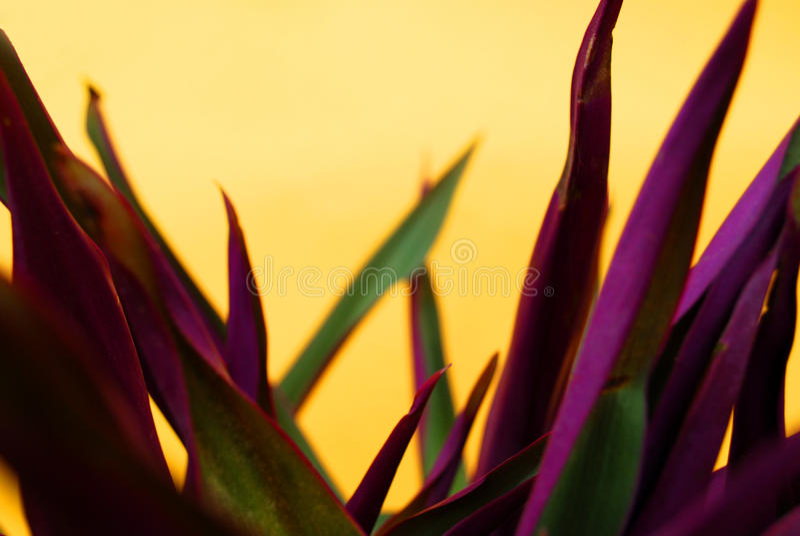 Hauptblumen über gelbem Hintergrund stockbild