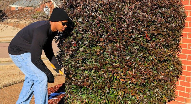Haupteindringling, der in den Büschen vor dem Einlaufen Haus sich versteckt lizenzfreies stockfoto