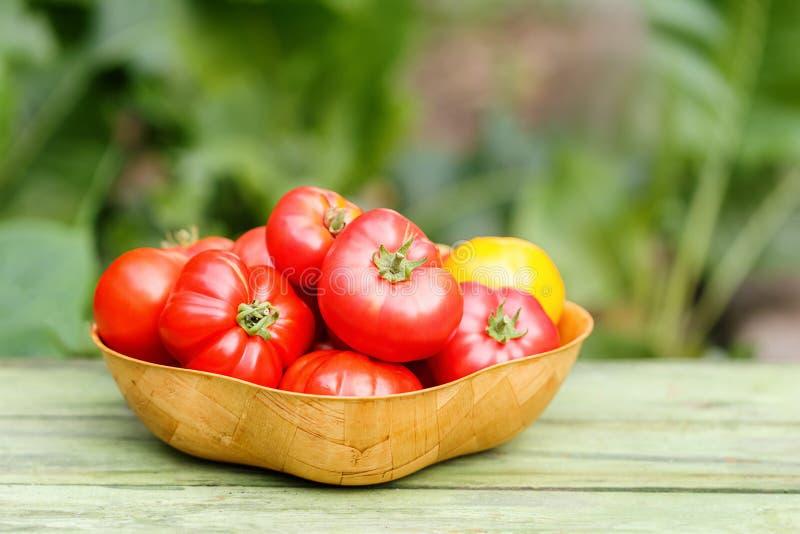 Haupternte von Tomaten in einer Bambusschüssel lizenzfreie stockbilder