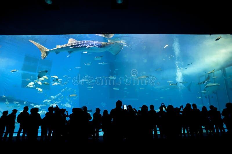 Haupttank Okinawa Aquariums stockfotos