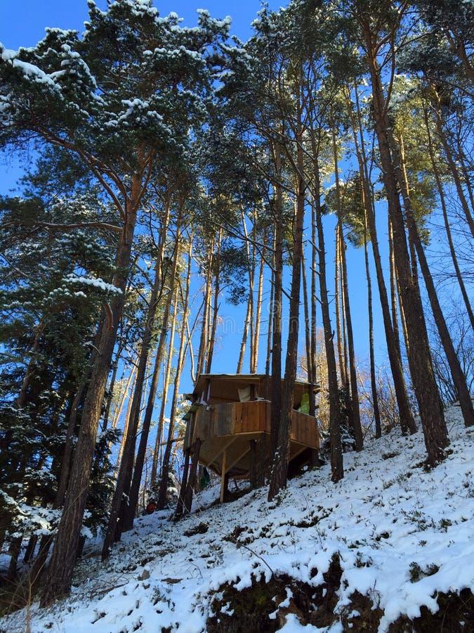 Haus auf Bäumen lizenzfreie stockbilder