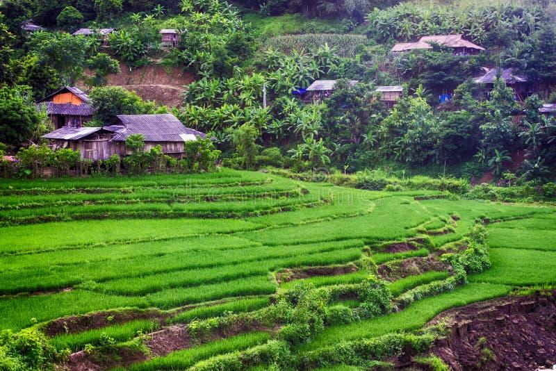 Haus auf Reis-Feld stockfoto