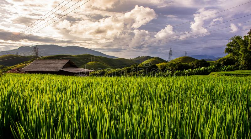 Haus auf Reis-Feld stockbilder