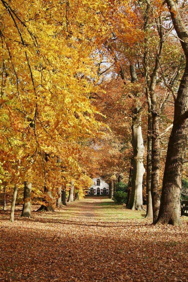 Haus im Holz mit Herbst lizenzfreie stockbilder