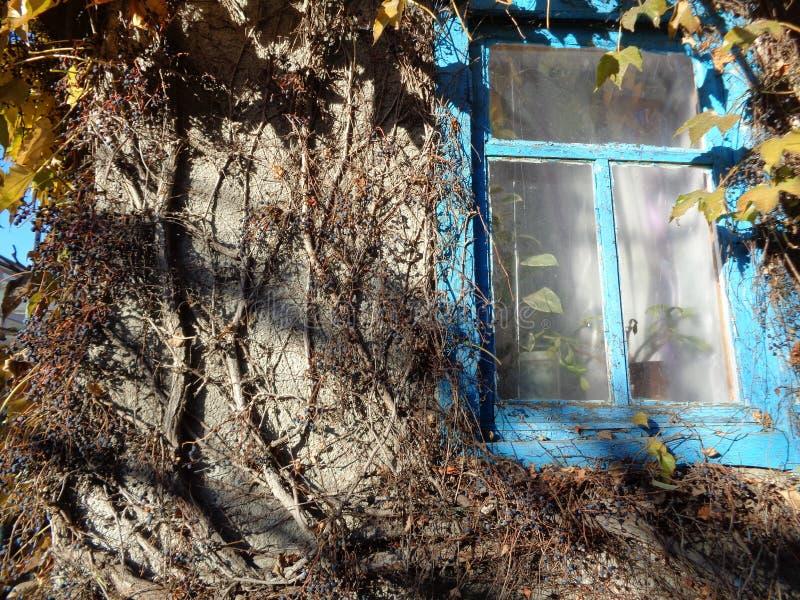 Haus mit Efeu lizenzfreies stockfoto
