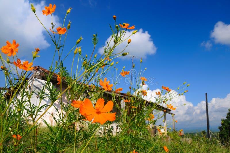 Haus und Blumen stockfotos