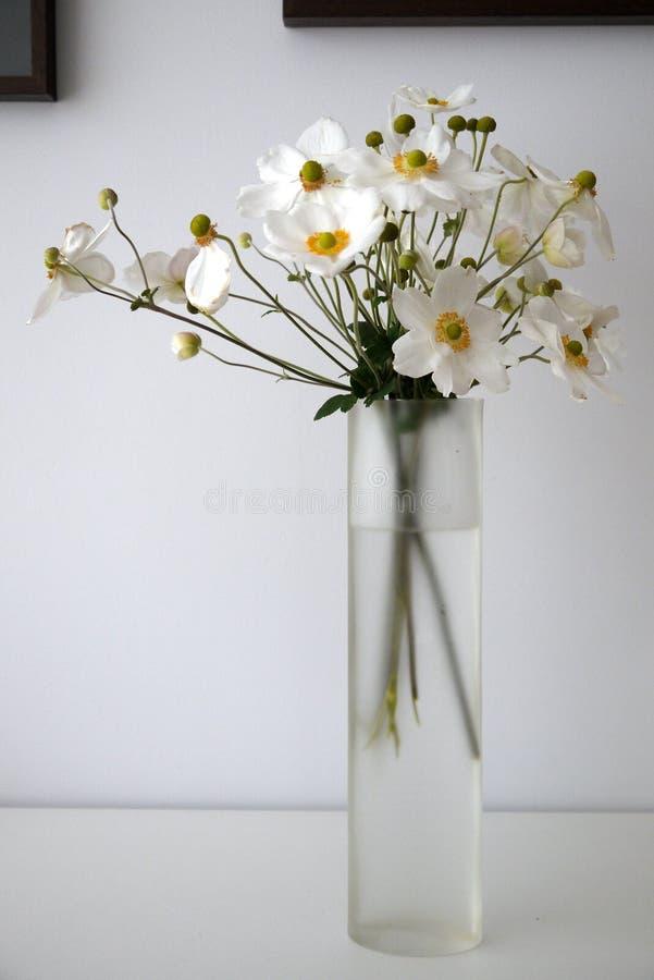 Haus: weiße Anemone blüht Glasvase - v stockfoto