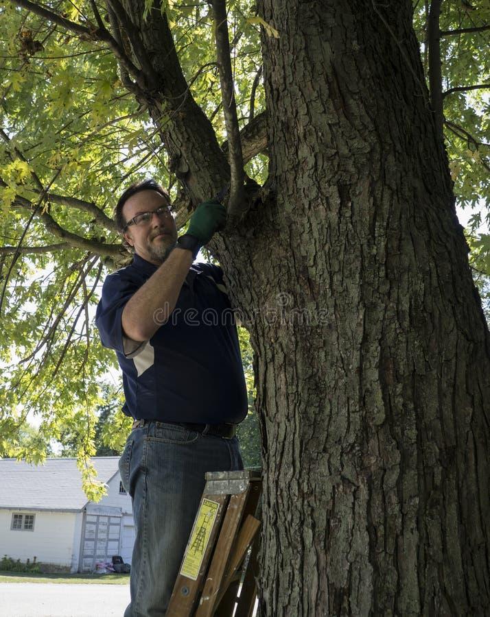 Hausbesitzer-Beschneidung eine niedrige hängende Niederlassung stockbilder