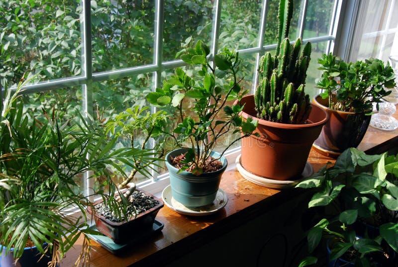 Hausgarten lizenzfreies stockbild