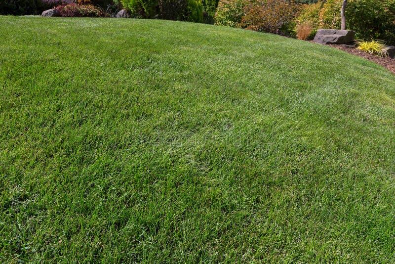 Hausgarten-grünes Gras-Rasen stockbilder