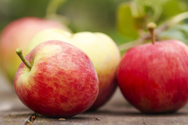 Hausgewachsen Rote, frische Apfelfrüchte aus biologischem Anbau auf rustikalem Holztisch im Sommergarten. Enge Bio-Rohvegan-gesun stockfotografie