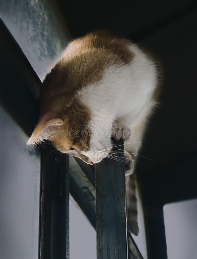 Hauskatze, die klug auf Fensterrahmen, Katzenlebensstil sitzt stockbild