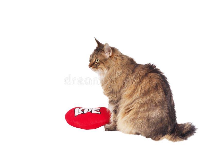 Hauskatze mit weichem rotem Herzen Valentin-Thema lizenzfreies stockfoto