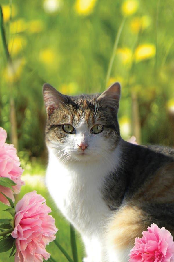 Hauskatze zu Hause mit Blumen lizenzfreies stockbild