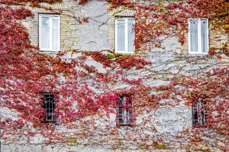Hausmauer bedeckt mit roter Herbstrebe in Kutaisi lizenzfreie stockfotos