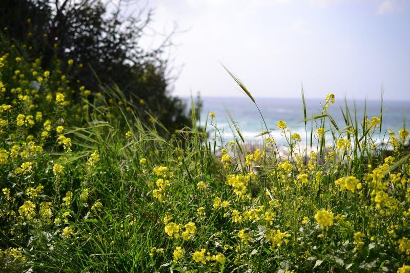 Hausse à Stella Maris à Haïfa au printemps, en Israël - chemin fleuri et chapelle sainte de famille sur le mont Carmel photo libre de droits