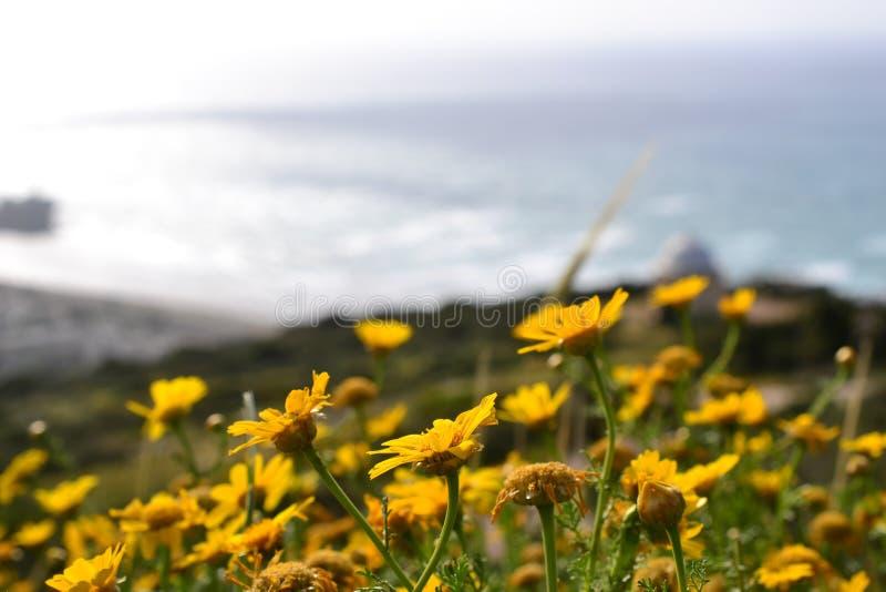 Hausse à Stella Maris à Haïfa au printemps, en Israël - chemin fleuri et chapelle sainte de famille sur le mont Carmel photo stock