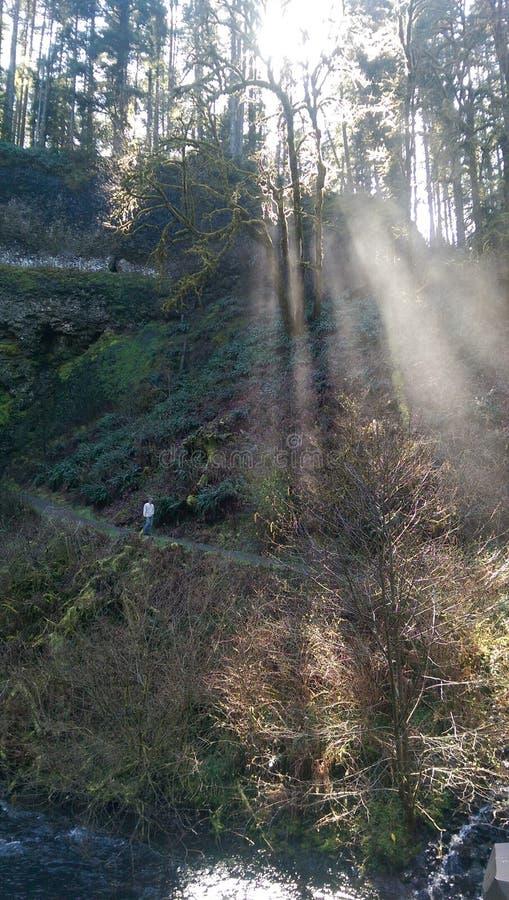 Hausse au soleil photos libres de droits