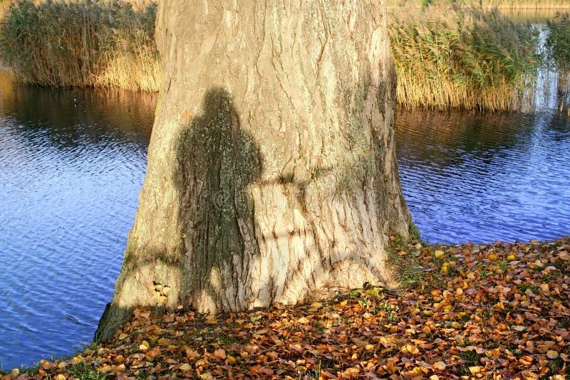 Hausse d'automne. photo libre de droits