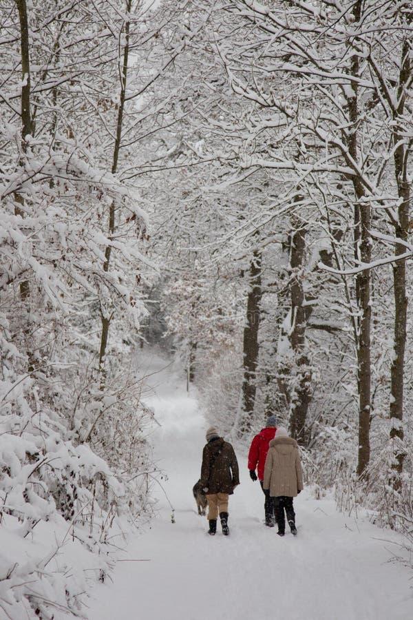 Hausse d'hiver dans la neige photos libres de droits