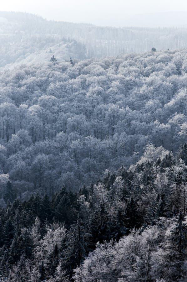 Hausse dans la forêt photo libre de droits
